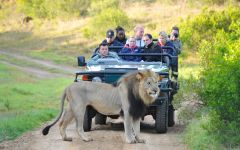 Eastern Cape Safari Special Offers