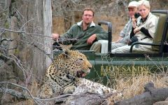 Leopard Photos Taken By Our Guests and Travel Butlers