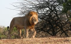 Safari Special Offers and Deals
