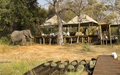 Botswana - What to Expect from a Safari