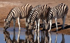 Escorted Safari Tours Across Southern and East Africa