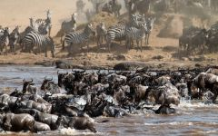 Kenya - The Great Migration