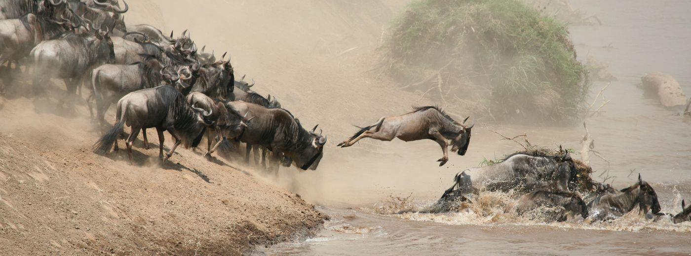 The Great Migration in Kenya