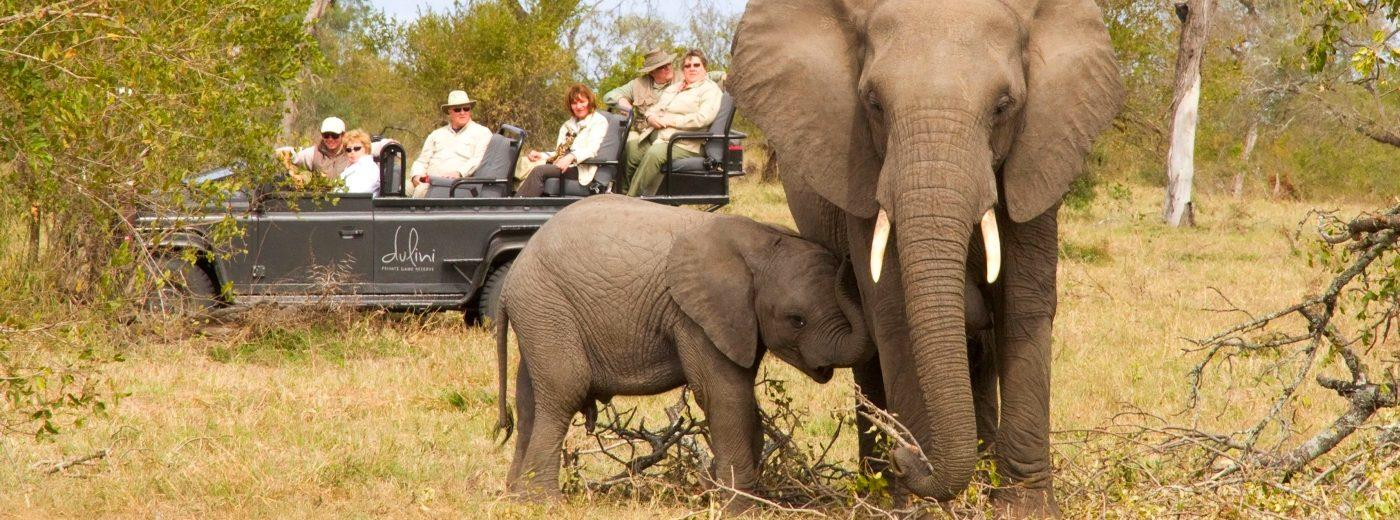 Kruger Park Safari Holidays