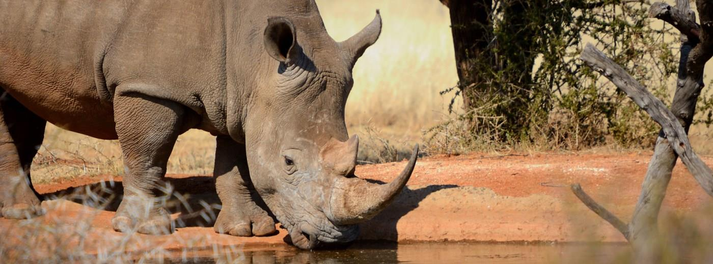 Facts about Rhino