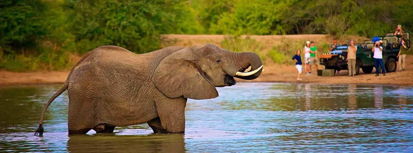 A Kruger Park Safari Adventure