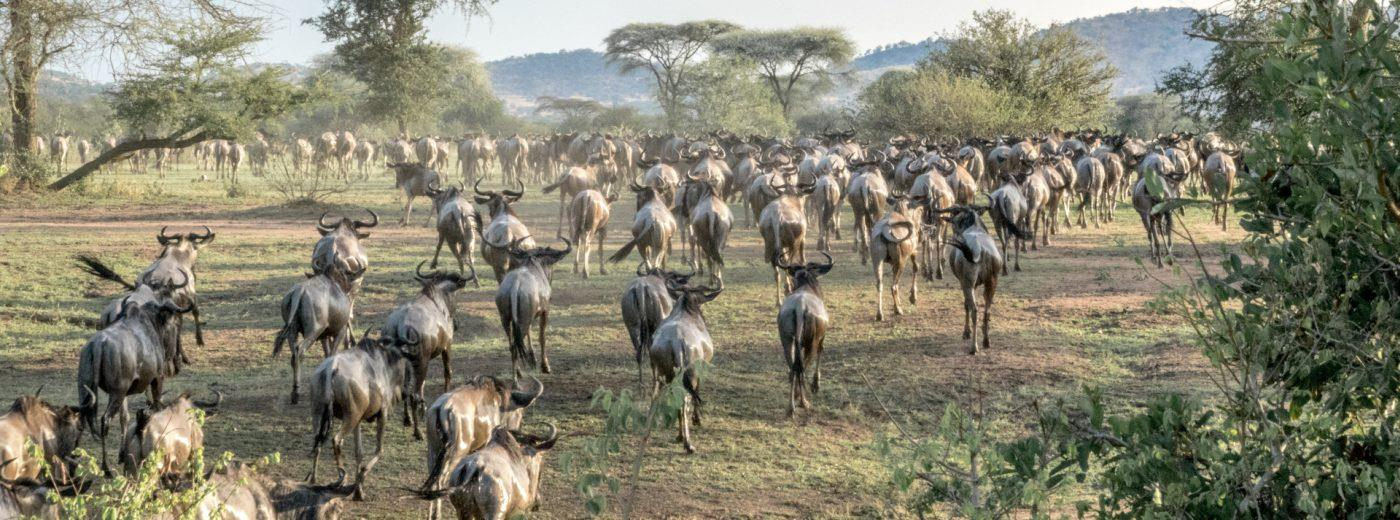 The Serengeti