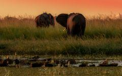 ITINERARY-02677: 4 Night Victoria Falls and Chobe Getaway