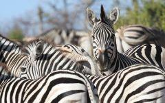 ITINERARY-02958: 5 Rivers Botswana Safari Special