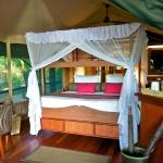 Samburu Intrepids Camp